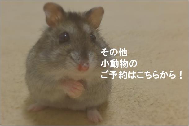 小動物の予約